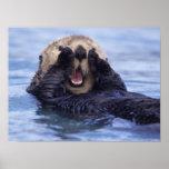 Cute Sea Otter | Alaska, USA Poster