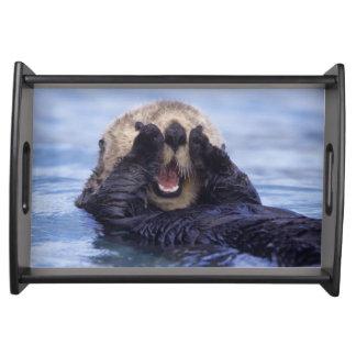 Cute Sea Otter | Alaska, USA Serving Tray