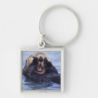 Cute Sea Otter   Alaska, USA Silver-Colored Square Keychain