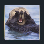"Cute Sea Otter | Alaska, USA Wood Coaster<br><div class=""desc"">NA,  USA,  Alaska Sea otters are the largest members of the weasel family in North America � Daisy Gilardini / DanitaDelimont.com</div>"