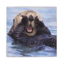 Cute Sea Otter | Alaska, USA Wood Coaster