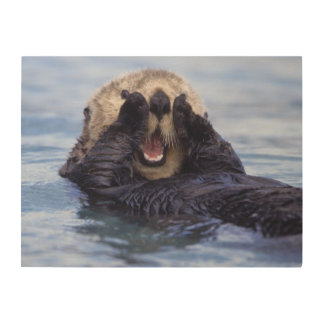 Cute Sea Otter | Alaska, USA Wood Wall Art