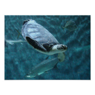 Cute Sea Turtle and  Fish Swimming Poster