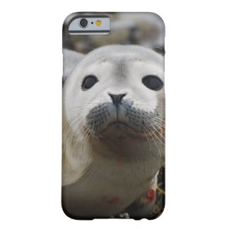 Cute Seal Barely There iPhone 6 Case