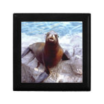 Cute Seal on a Rock Gift Boxes