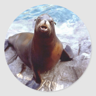 Cute Seal on a Rock Classic Round Sticker
