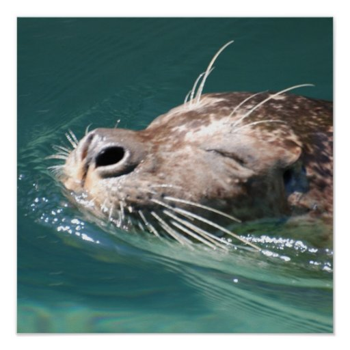 Cute Seal Print
