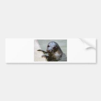 Cute Seal Pup Bumper Sticker