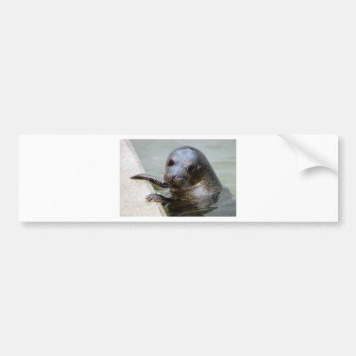Cute Seal Pup Bumper Stickers