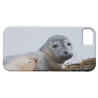 Cute Seal Pup iPhone 5 Cases