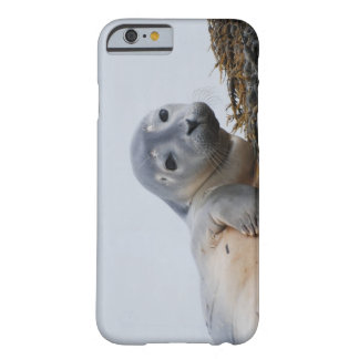 Cute Seal Pup Barely There iPhone 6 Case