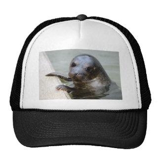 Cute Seal Pup Hats