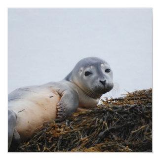 Cute Seal Pup Personalized Invitation