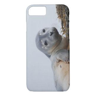 Cute Seal Pup iPhone 7 Case