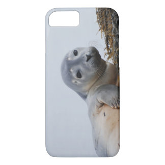 Cute Seal Pup iPhone 8/7 Case