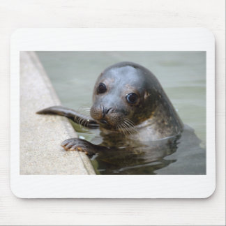 Cute Seal Pup Mouse Pad