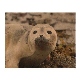 Cute Seal Pup Cork Paper Print