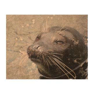 Cute Seal Pup Cork Paper