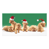 Cute Sha-Pei Puppies Card