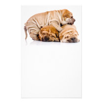 Cute Shar Pei Puppies Flyer
