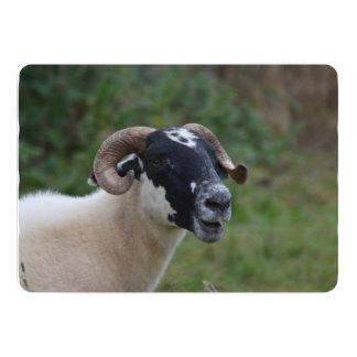 Cute Sheep 5x7 Paper Invitation Card