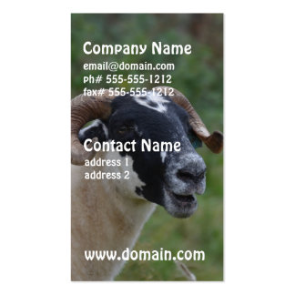 Cute Sheep Double-Sided Standard Business Cards (Pack Of 100)