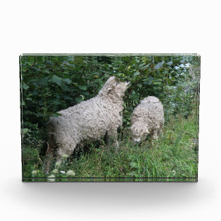 Cute Sheep Eating Leaves Acrylic Photo Block Award