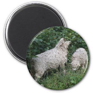 Cute Sheep EAting Leaves Magnet