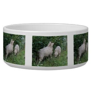 Cute Sheep Eating Leaves Pet Bowl
