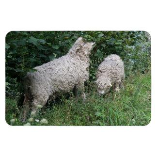 Cute Sheep Eating Leaves Premium Magnet