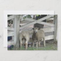 Cute Sheep Invitation