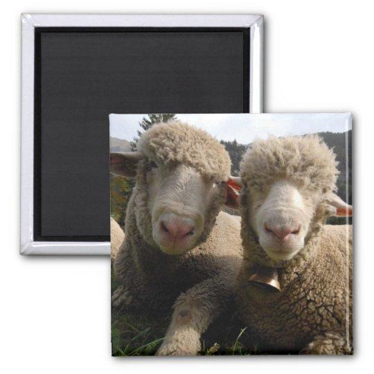 Cute Sheep Magnet