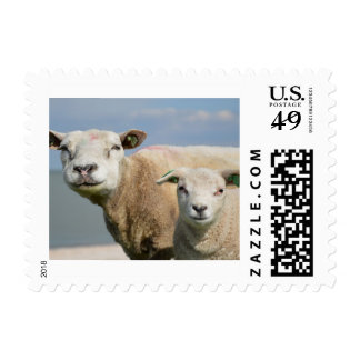 Cute Sheep Postage Stamp