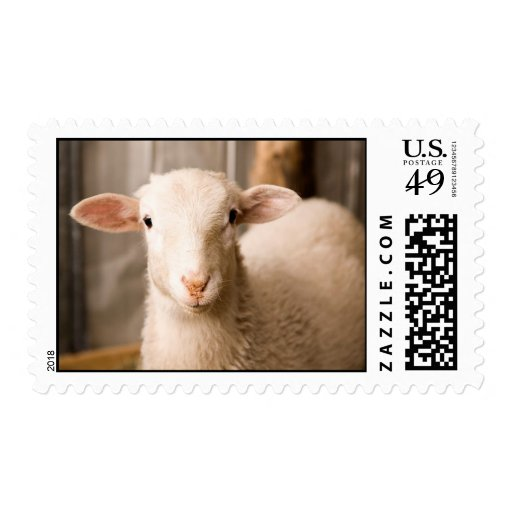 Cute Sheep Postage Stamps