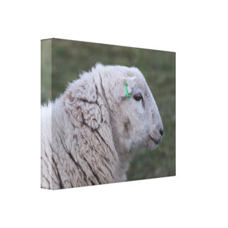 Cute sheep profile picture canvas stretched canvas prints