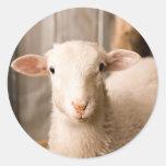 Cute Sheep Round Sticker