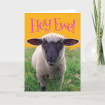Cute Sheep Saying Hey Ewe! Happy Birthday Card