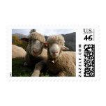 Cute Sheep Stamp