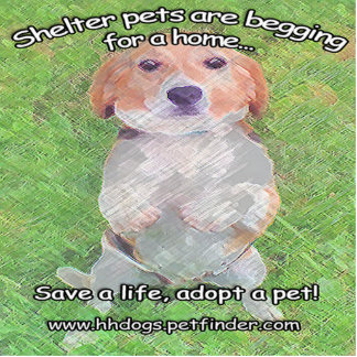 Cute Shelter Pets Begging for a home design Cutout
