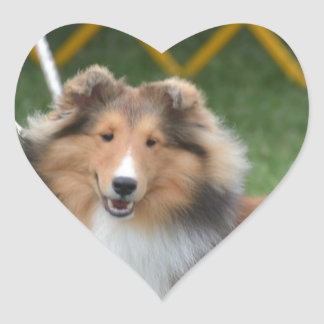 Cute Sheltie Heart Sticker