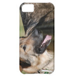 Cute Shepherd Cover For iPhone 5C