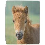 Cute Shetland Pony Foal Horse Head Frontal Photo . iPad Smart Cover