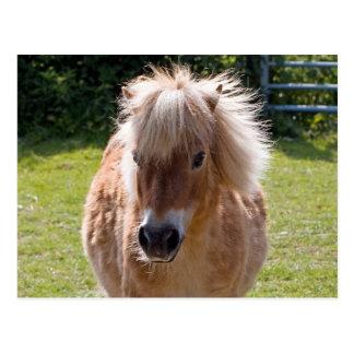 Cute shetland pony head close-up postcard
