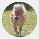 Cute shetland pony  sticker, gift idea
