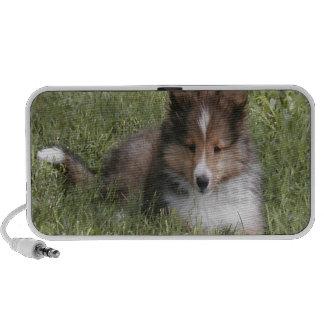 Cute Shetland Sheepdog puppy lying in grass Mini Speaker