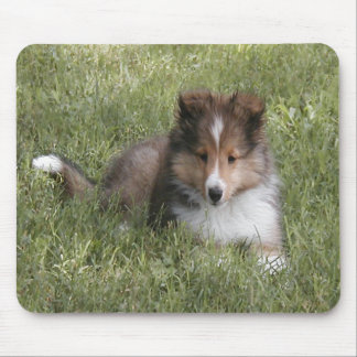 Cute Shetland Sheepdog puppy lying in grass Mouse Pad