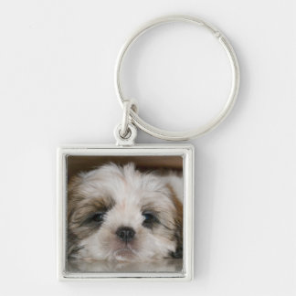 Cute Shih Tzu Dog Keychain