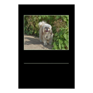 Cute Shih Tzu Puppy Dog.... Add your quote/saying Poster
