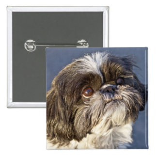 Cute Shih Tzu Puppy Pin