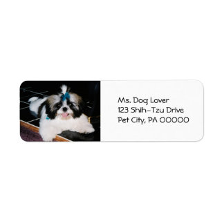 Cute Shih-Tzu Puppy  Return Address Labels